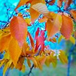 Autumn beautiful time adorns our yards